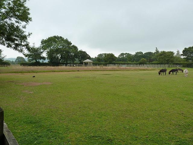 Donkeys in a field at Trow