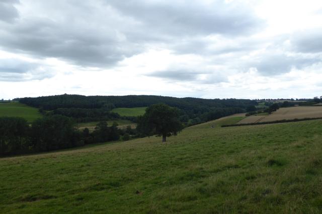 Fields near Badger Wood