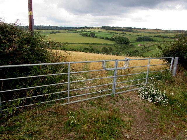 Field gates, Church Hill, English Bicknor