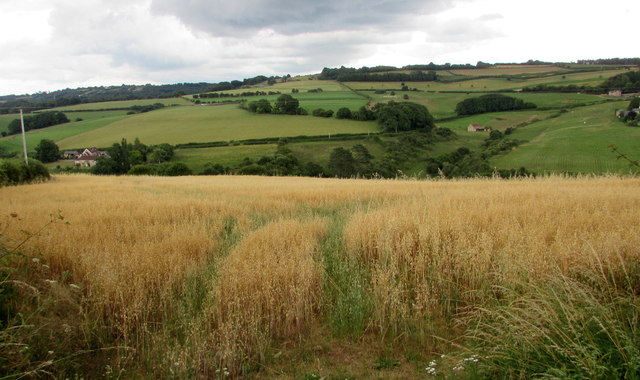 View from English Bicknor field gates
