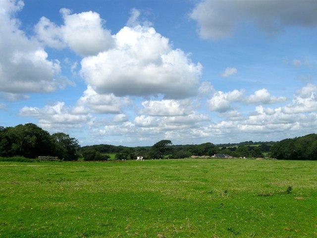 Coppice Field