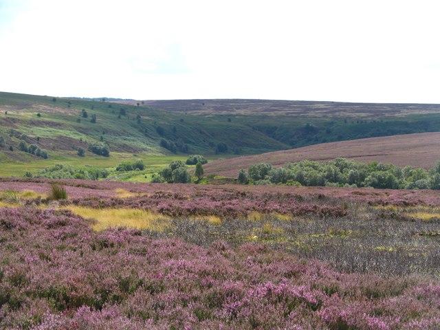 Across the moor towards Fen Bogs