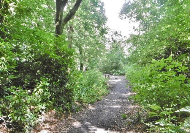 St Helens, woodland path