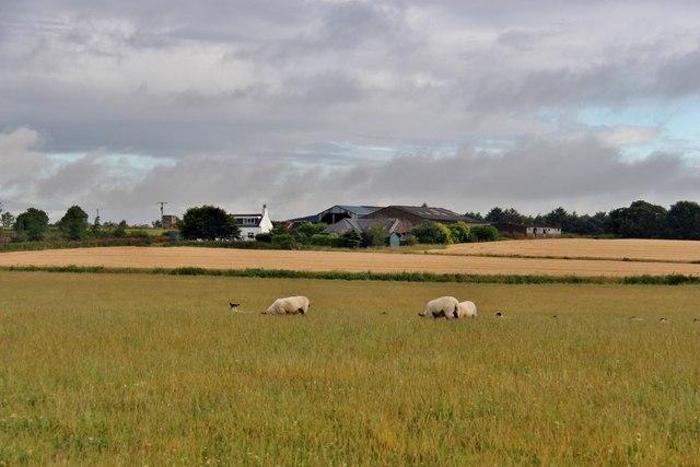 Farmland at Backhill