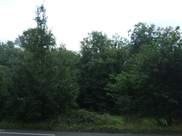 Woodland beside Woodford New Road (A104)