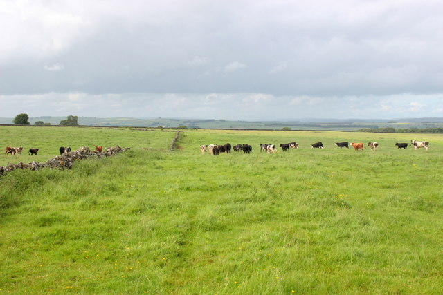 Countryside Near Prospect Mine