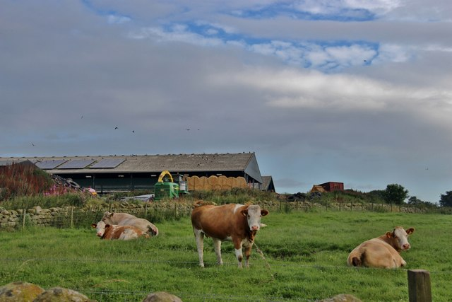 Farming at Goval