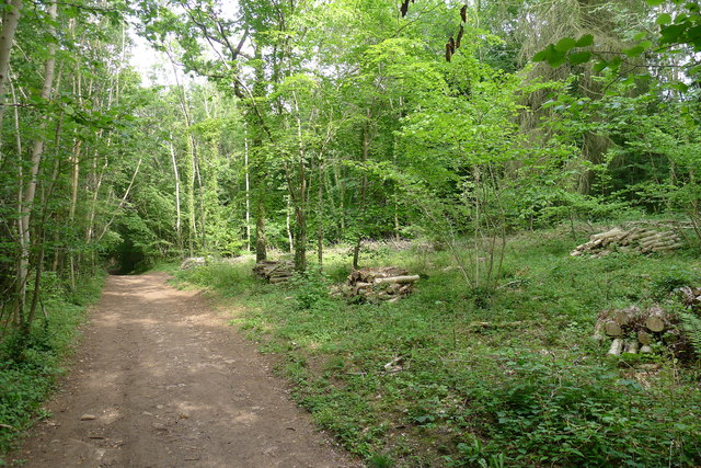 The Cotswold Way in Stanley Wood