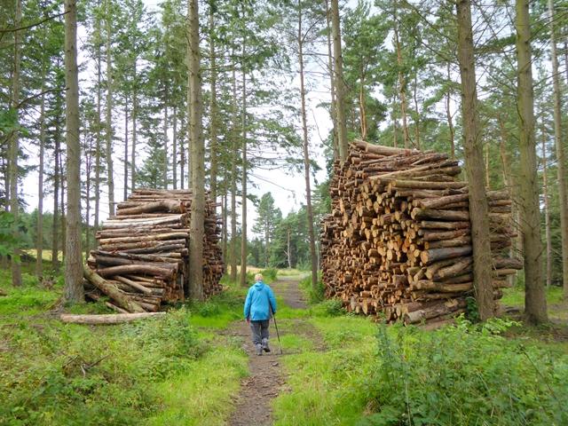 Huge log piles near the Devil's Water