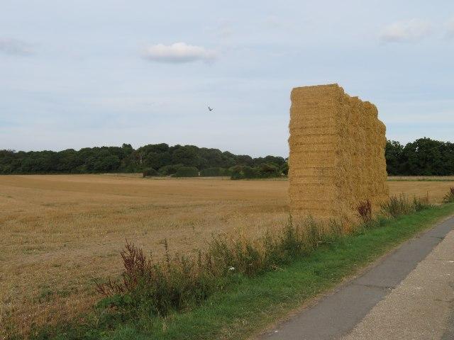 Harvest time - Lower Field