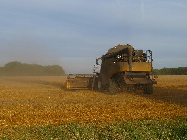 Harvest time - Danny Field (26 acres)