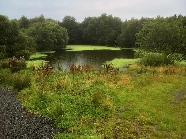 Pond near Birley Wood