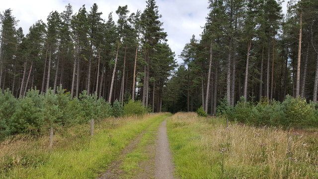 Footpath in Slaley Forest