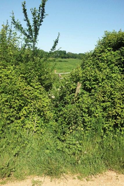 Awkward footpath near Wood Dairy Farm