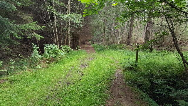 Footpath in Brockey Plantation
