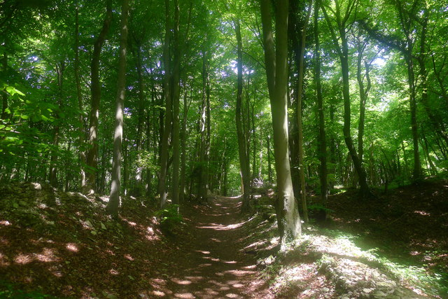 The Cotswold Way in Standish Wood