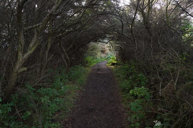 Path through the bushes at Aberlady Bay