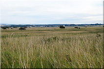 NT4681 : Dunes at Yellow Mires, Aberlady Bay by Mike Pennington