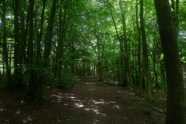 In Standish Wood