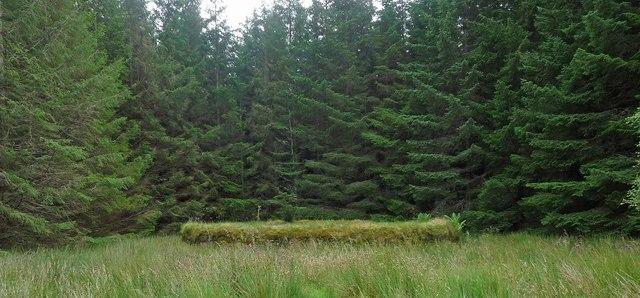 Sheepfold, Quintfall Forest, Caithness