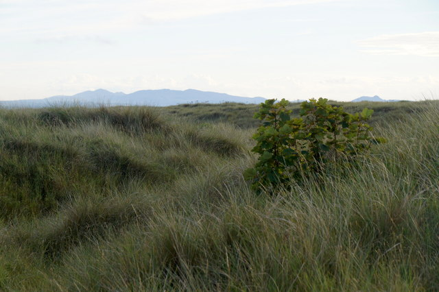 Looking SW in the dunes at Aberlady Bay