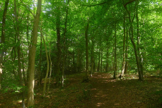 In Stockend Wood