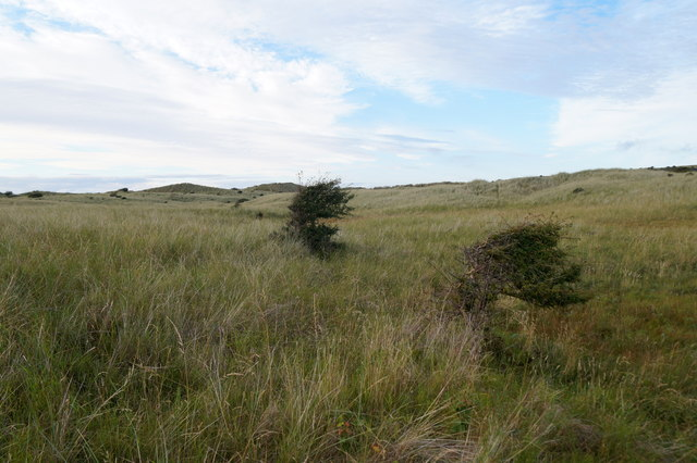 Dunes at Aberlady Bay