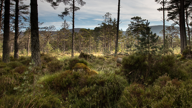 Lightly forested area in The Queen's Forest
