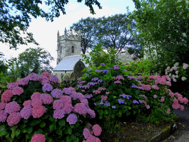Hydrangeas at the edge of St Helena Churchyard in Helland