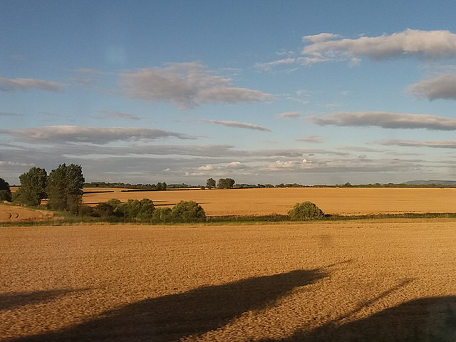 Fields around the Wiske