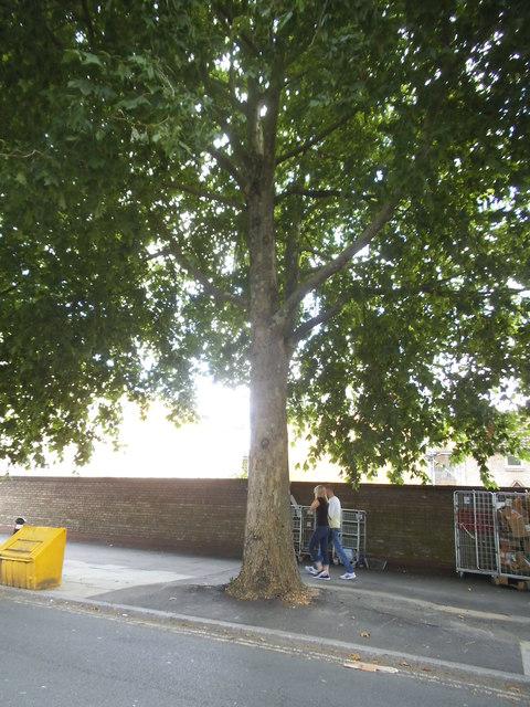 Tree on Southwark Park Road, Bermondsey