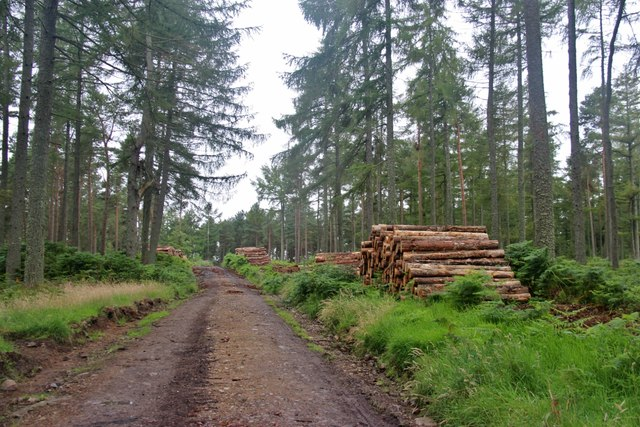Logging at Balbithan Wood