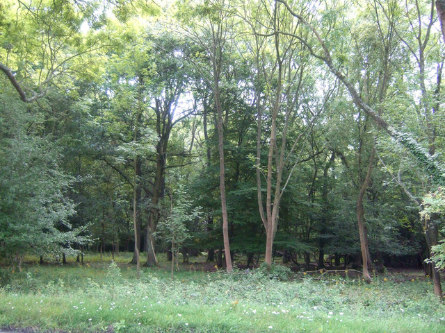 View into Epping Forest