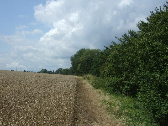 Crop field beside Cobbin's Brook