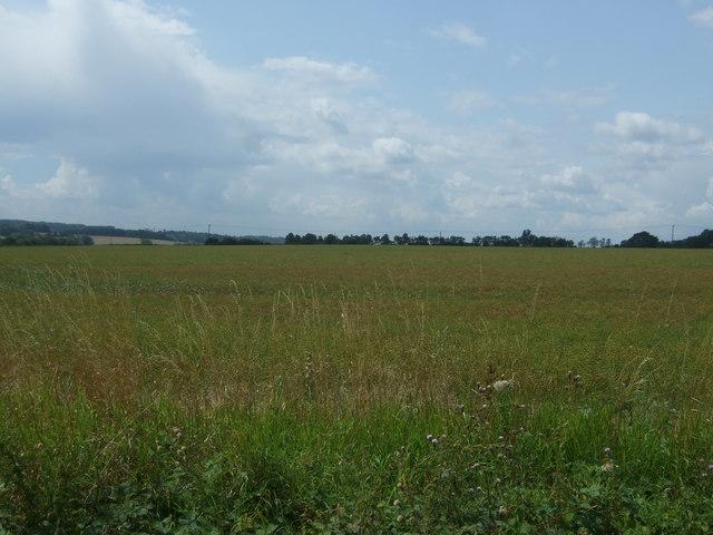 Farmland, Pinch Timber