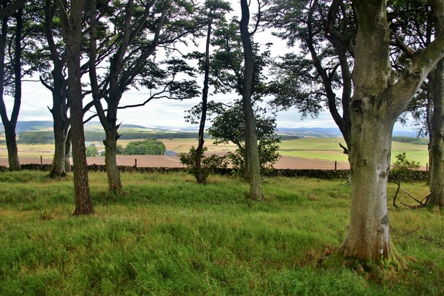 View over rural Aberdeenshire through shelterbelt