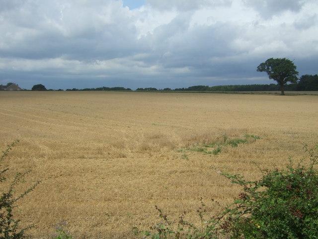 Stubble field off London Road (B1393)