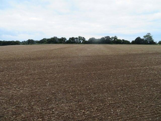 Great Wildcroft Field