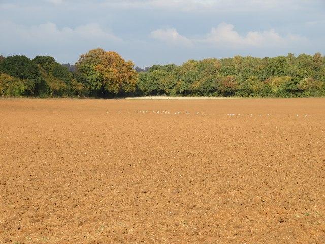 Lower Field - Breach Farm