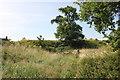 SJ4159 : Aldford Castle (Blobb Hill) Motte by Jeff Buck