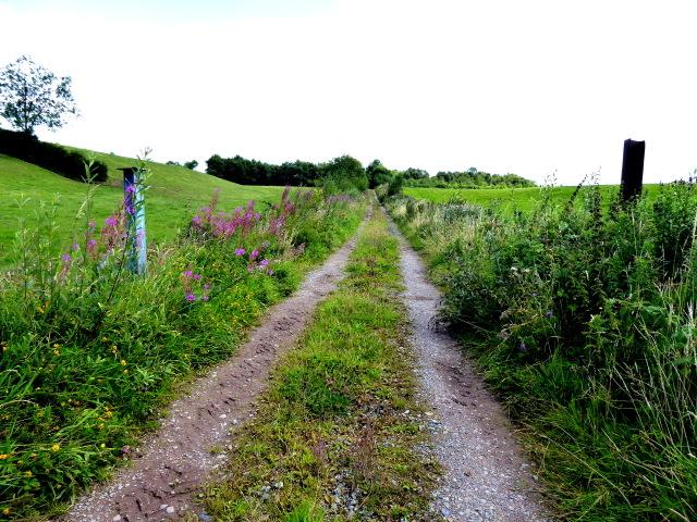 Rough lane, Tattyreagh Glebe