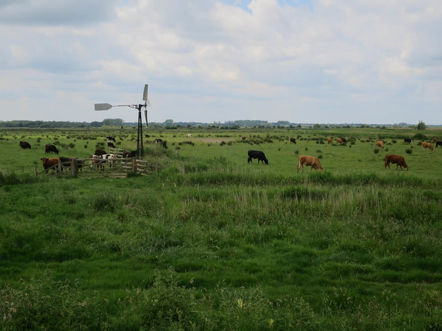 Windpump and cows on Upton Marshes