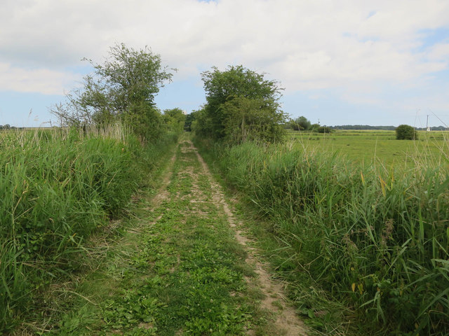 Track across Upton Marshes