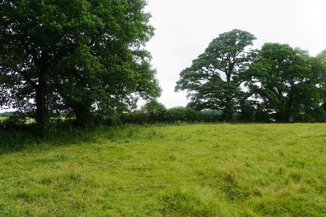 Field near Fyne Court