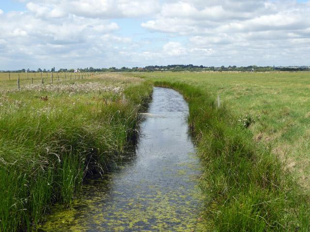 Ditch, Bluehouse Farm nature reserve