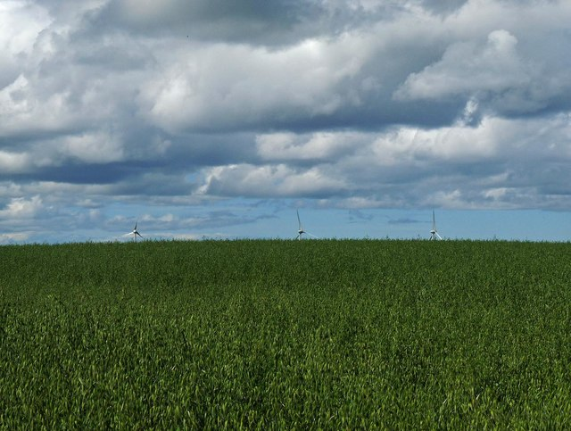 Field of oats, Scoolary, Caithness