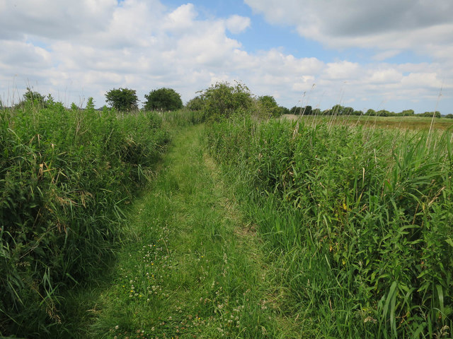 Footpath to River Bure