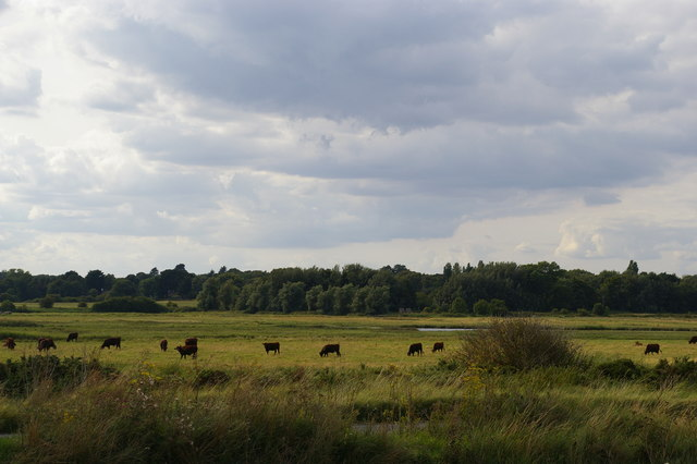 Damp grazing land inland from the shingle bank, Aldeburgh