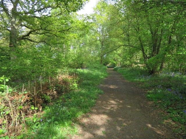 Path through St John's Copse
