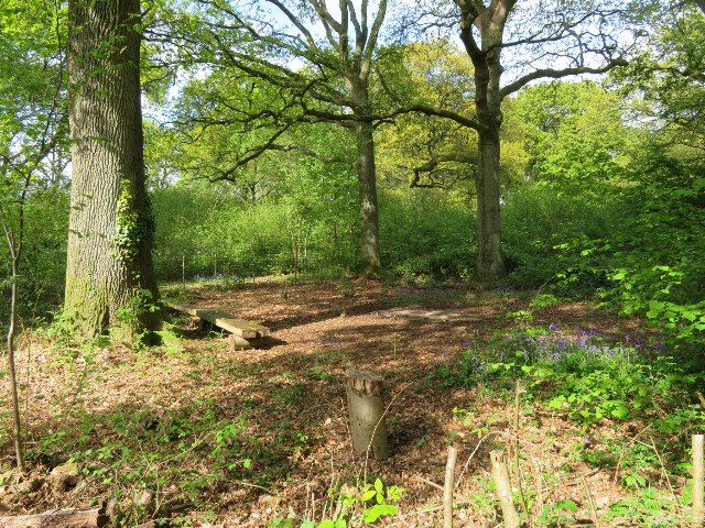 Clearing within St John's Copse